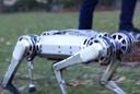 Mini-cheetah robot