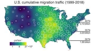 Cumulative bird migration map